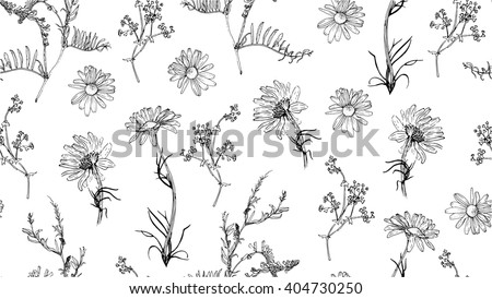 Raster illustration. Seamless pattern with hand drawn plants. Herbal background.  Botanical illustration.  Seamless background with chamomile