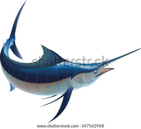 Raster image of a blue marlin isolated on white background.