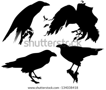 raster - raven birds detailed  silhouettes - fine black outlines over white (vector version is available in my portfolio) - stock photo