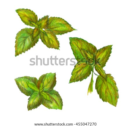 Raster realistic image of nettle leaves isolated on white. Element for herbal production, meds, thematic ads, decoration of different printed production, books, magazines.