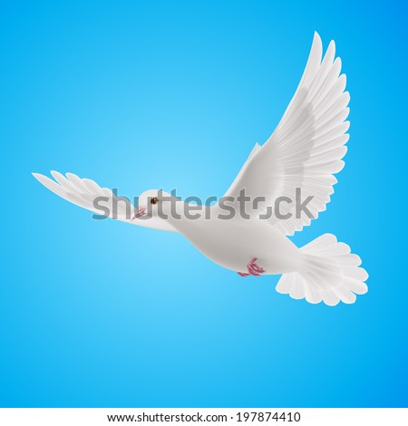 Raster version. Flying white dove on blue background. Symbol of peace