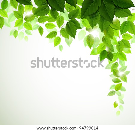 raster version of Summer branch with fresh green leaves - stock photo