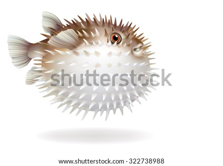 Raster version / Puffer fish with needles on a white background [Tetraodontidae]