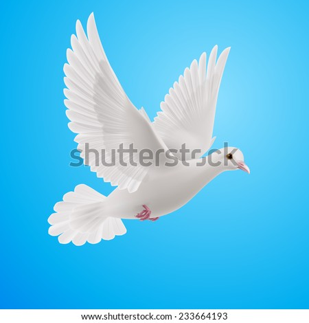 Raster version. Realistic white dove on blue background. Symbol of peace