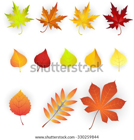Raster version. Set of colorful autumn leaves. illustration.  - stock photo