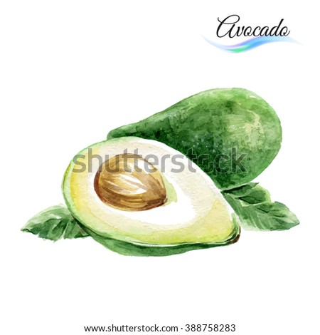 Raster version. Watercolor fruit avocado isolated on white background