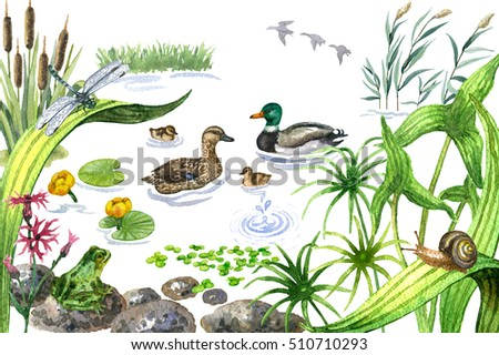 Duck pond stock images royalty free images vectors for Garden pond design books