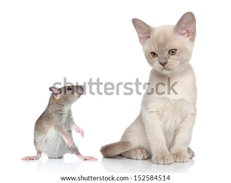 Rat and kitten. Close-up portrait on white background - stock photo