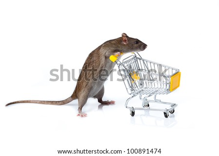 rat and the shopping cart. a rat with a basket - stock photo