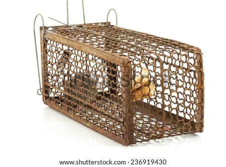 rat cage trap on white background - stock photo