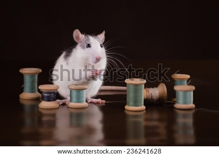 Rat in a retro interior, on brown background - stock photo