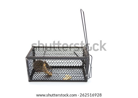 Rat in cage isolated on white background - stock photo