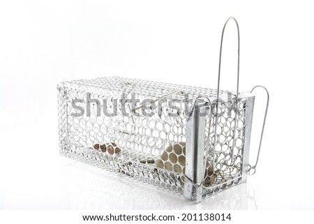 rat in the cage trap in white background  - stock photo