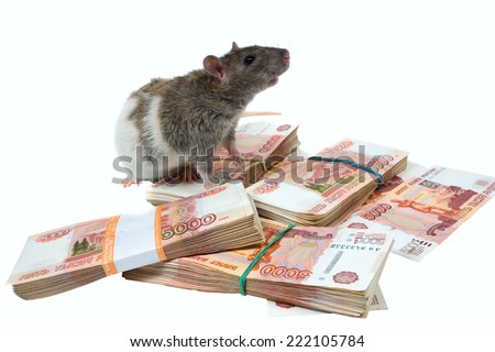 rat on packs with banknotes - stock photo