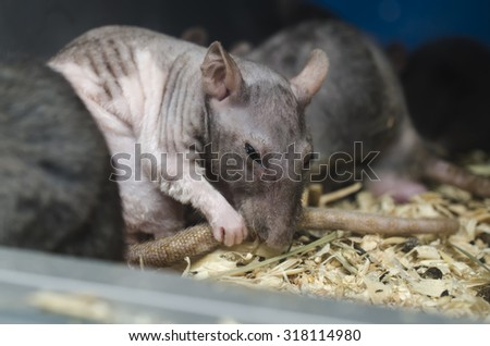 rat tail washes - stock photo