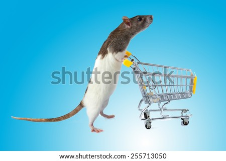 Rat with shopping cart  on blue background. concept for pet shop. rat with a basket - stock photo