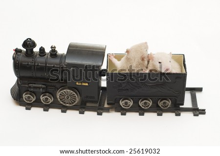 rats and train - stock photo