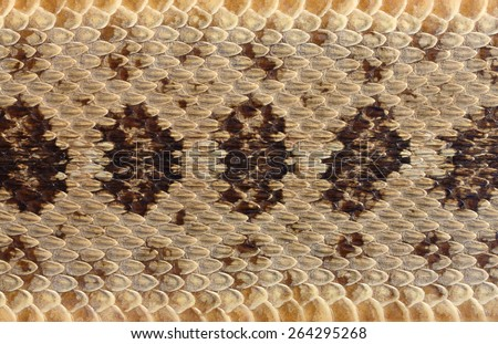rattlesnake skin close-up - stock photo