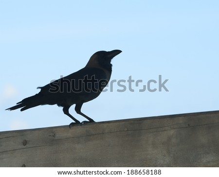 raven against the sky, Maldives - stock photo