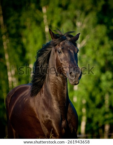 Raven horse - stock photo