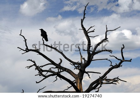 raven sitting on stark tree in silhouette