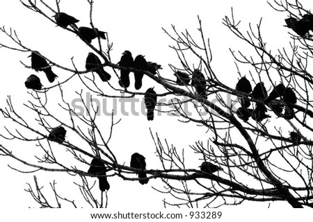 ravens on the branch - stock photo