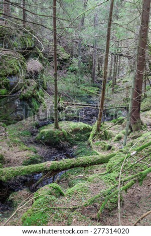 Ravine in a old growth forest - stock photo