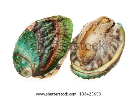 Abalone Shell Stock Photos, Royalty-Free Images & Vectors ...