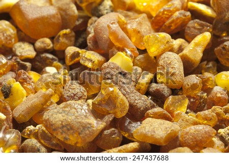 Raw amber from the shores of the Baltic Sea in the Kaliningrad region