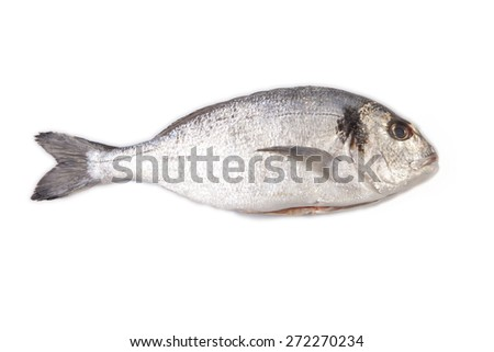 Raw and clean sea bream fish. Isolated over white background - stock photo