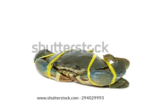 Raw black crab tied with rope yellow on white background.