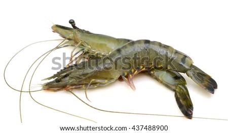 Raw black tiger shrimps isolated on white background - stock photo