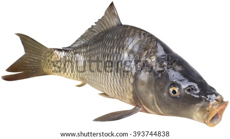 raw carp isolated on white background by clipping path