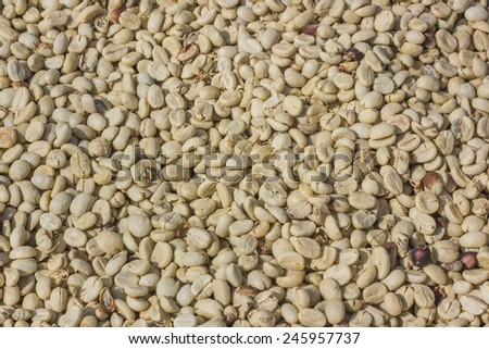 raw coffee bean