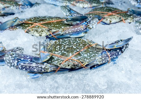 Raw crab shellfish on ice ready for cooking - stock photo