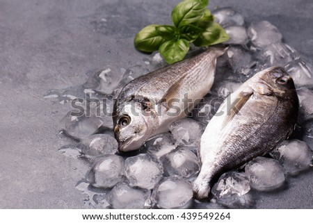 Raw delicious fresh fish on ice on dark gray background. Gilt-head sea bream fish on ice. Decorated with basil. Copy space. - stock photo