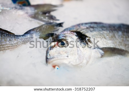 Fish store stock images royalty free images vectors for Fresh fish store