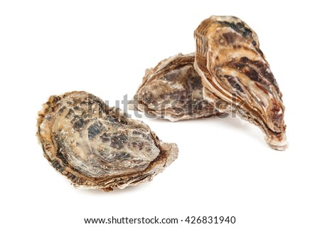 raw delicious oysters on white background - stock photo