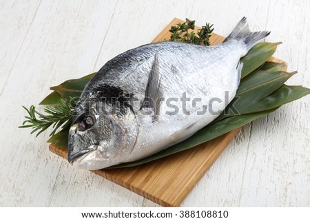 Raw dorado with rosemary and thyme ready for cooking - stock photo