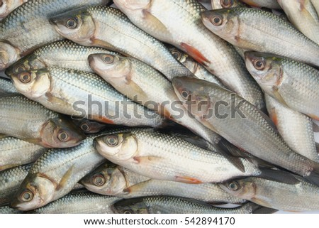 stock-photo-raw-fish-background-54289417