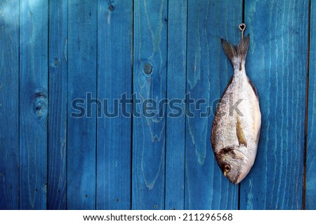 raw fish hanging on a blue wooden fence - Goldfish, gilthead sea bream - stock photo