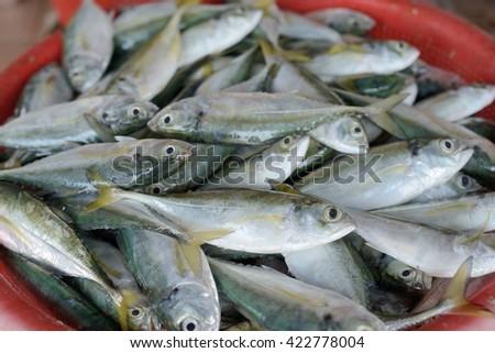 Raw fish mackerel (kambong) in basket selling in the market - stock photo