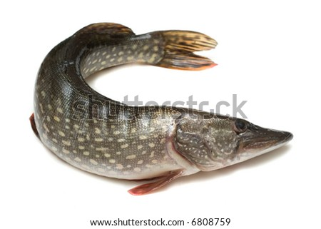 Raw fish (pike). Image series of different food on white background