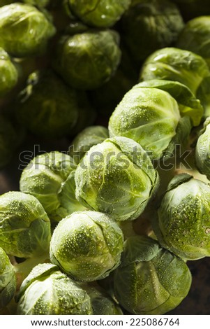 Raw Green Organic Brussel Sprouts on the Stalk