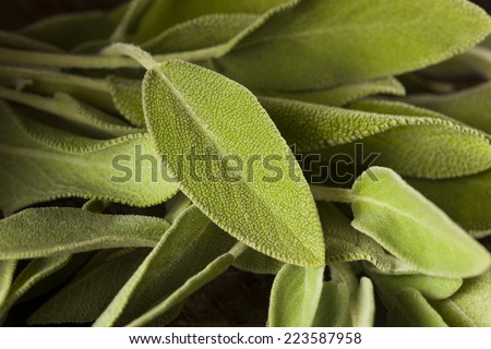 Raw Green Organic Sage on a Background
