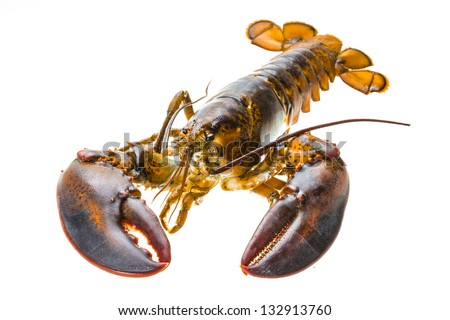 Raw lobster - stock photo