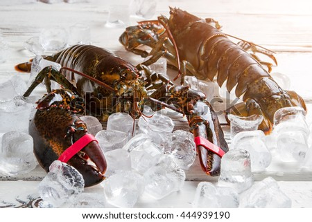 Raw lobsters on ice cubes. Fresh lobsters with tied claws. Delicacies in seafood restaurant. Main ingredient for special dish. - stock photo