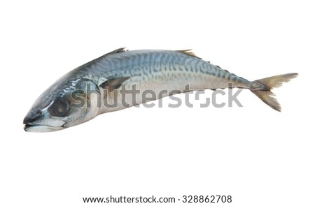 Raw mackerel fish isolated on white background