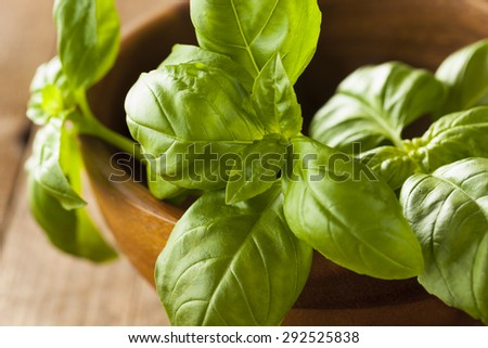Raw Organic Green Basil Ready to Cook With - stock photo