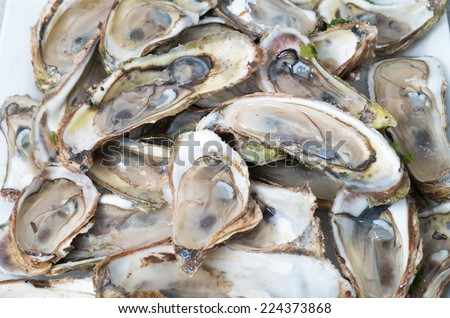 Raw oysters bed - stock photo